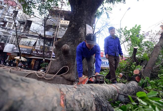 tin tức mới cập nhật 24h ngày 27/03/2015 đề cập đến vấn đề chuyên gia lên tiếng vụ chặt cây xanh Hà Nội bị nhắc nhở