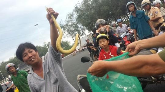 tin tức mới cập nhật: Đi xe hơi chở hơn 100 con rắn thả trộm trong khu dân cư