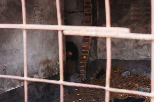 Fang Chung bị cha mẹ nhốt vào lồng sau khi có những biểu hiện của bệnh tâm thần, theo tin tức mới nhất. Ảnh Mirror