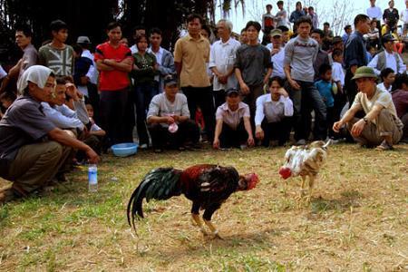 Những tin pháp luật online nổi bật trong ngày đề cập đến trường gà gây bức xúc dư luận ở Tiền Giang