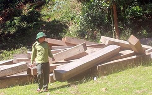 Những tin tức pháp luật mới nhất hôm nay đề cập đến vụ  lãnh đạo tỉnh Quảng Nam chỉ đạo xử lý nghiêm minh các vụ phá rừng.