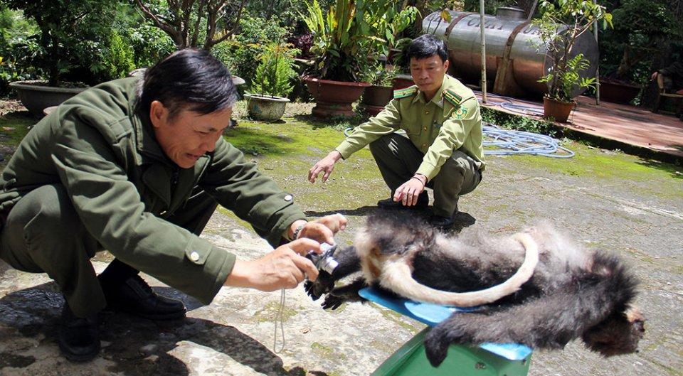 Điều tra vụ sát hại 5 con voọc chà vá chân đen ở Lâm Đồng là một trong những tin pháp luật 24h qua