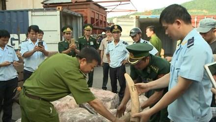Trong những tin tức pháp luật mới nhất hôm nay có vụ Thu giữ 2 tấn ngà voi nhập lậu giấu trong container gỗ