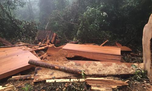 Phát hiện hơn 100 tấm gỗ pơmu bị vứt ở bờ sông là một trong những tin pháp luật 24h qua
