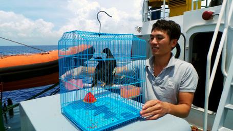 Đôi chim sáo được Trung úy Lê Trọng Tấn (quê Yên Định, Thanh Hóa) mang theo phần nào giúp các chiến sĩ cảnh sát biển vơi đi nỗi nhớ nhà, nhớ đất liền thân thương