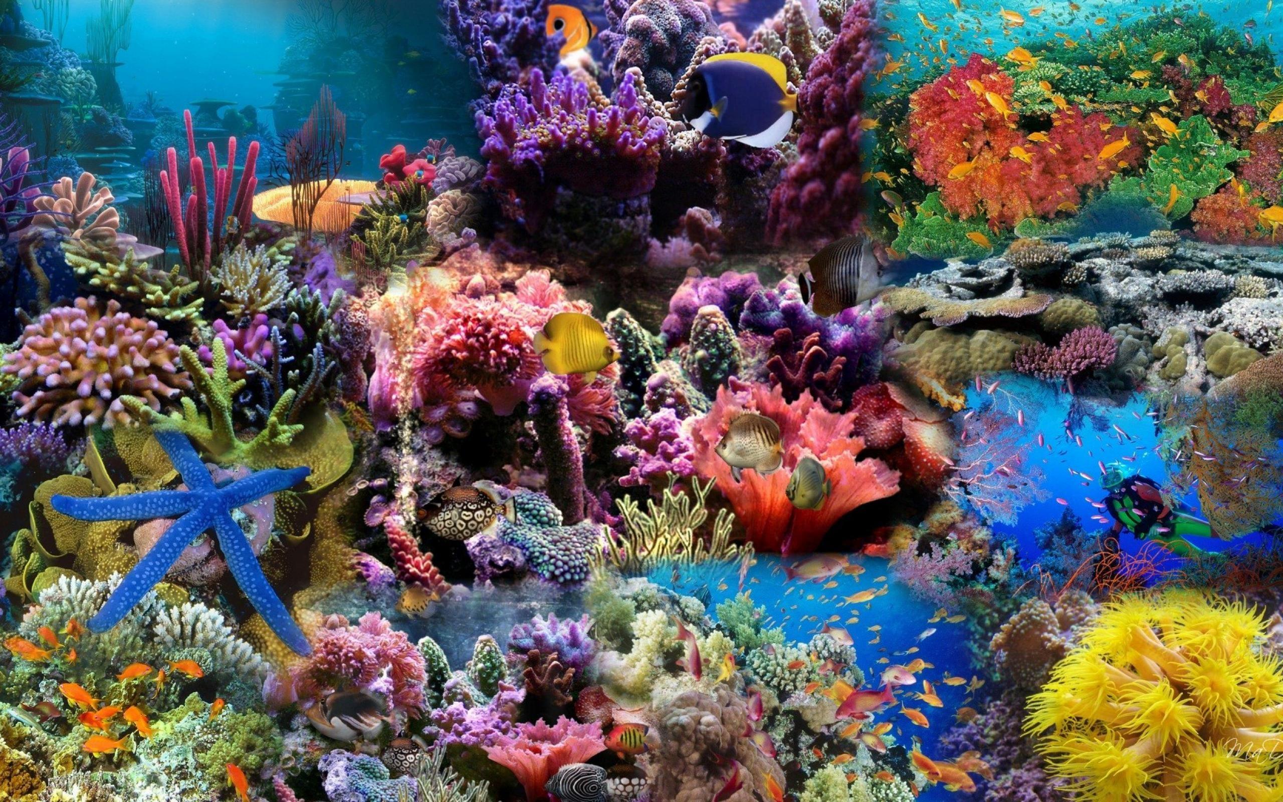 Các hoạt động xây dựng trái phép của Trung Quốc tại Trường Sa đang hủy hoại nghiêm trọng san hô ở Biển Đông