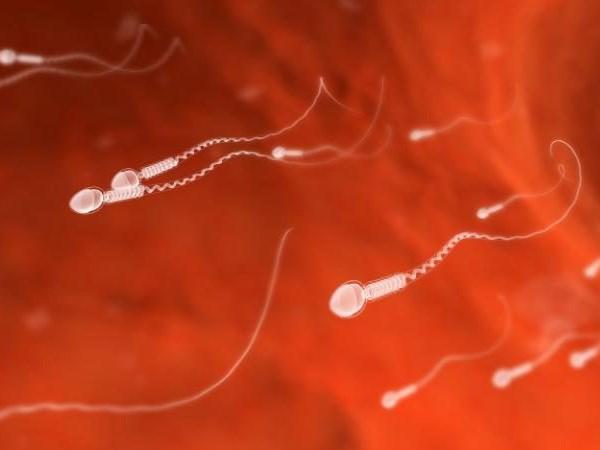 Tinh trùng soi dưới kính hiển vi. Nguồn: Telegraph