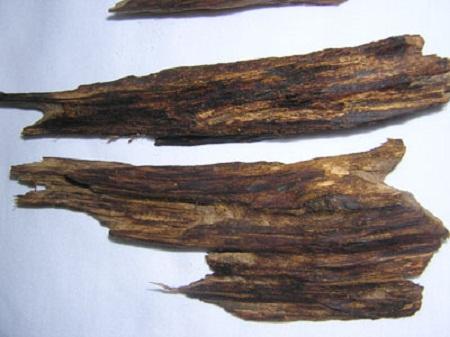 Trầm hương kỳ nam được gọi là 'Vàng của rừng'