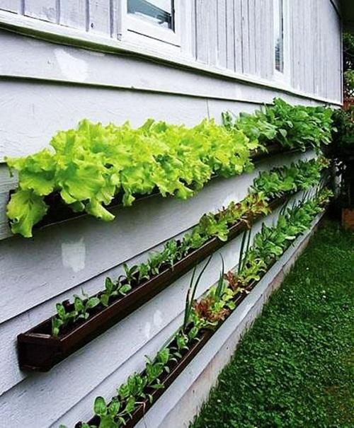 Trang trí nhà bằng cây xanh trồng trên tường