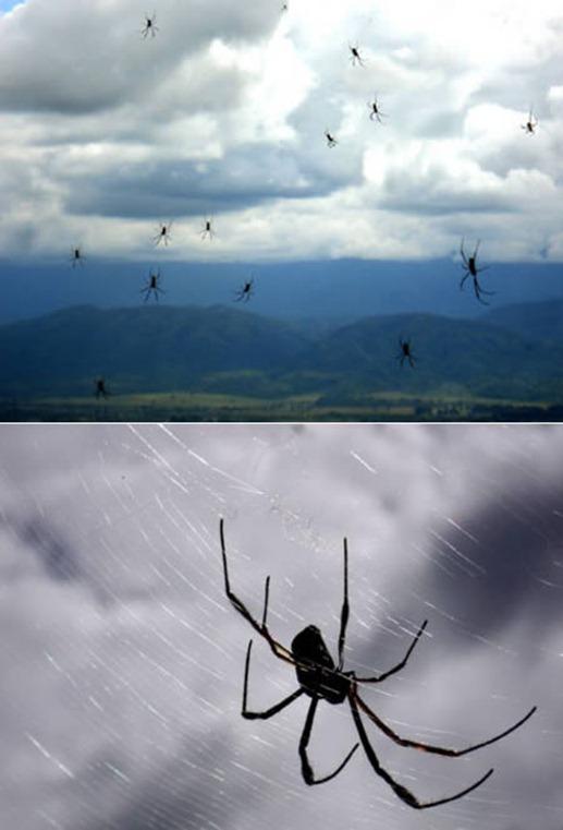 mưa nhện kỳ lạ
