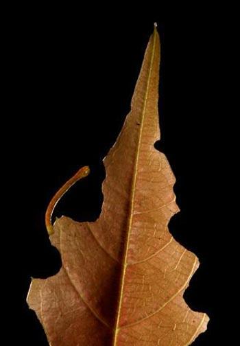 Nghệ thuật ngụy trang của loài bướm