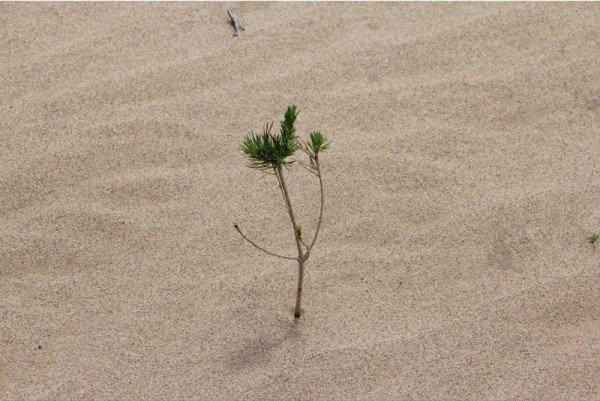 Hàng triệu cây xanh đã được trồng tại vùng sa mạc Nội Mông, Trung Quốc
