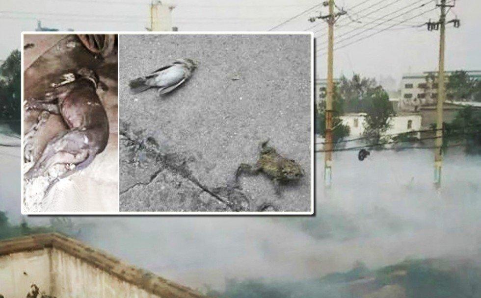 Ảnh đăng tải lên mạng xã hội cho thấy động vật chết la liệt do ngộ độc khí amoniac sau vụ rò rỉ hóa chất
