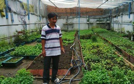 Anh Bùi Ngọc Minh Tâm và cách trồng rau sạch của gia đình