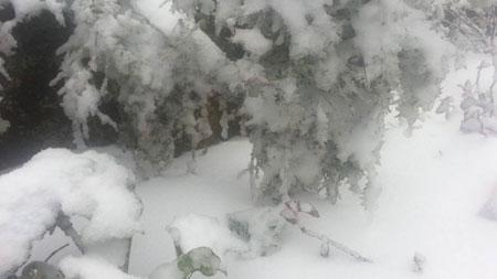 Do ảnh hưởng của không khí lạnh tăng cường nên nhiệt độ Lào Cai xuống thấp, trời rét đậm, vùng núi rét hại. Du khách Ngọc Sáng đang du lịch ở khu vực Sapa cho biết, khoảng 10h hôm nay anh thấy tuyết rơi ở khu vực đèo Ô Quý Hồ. Sau đó tuyết rơi ngày càng dày vào gần trưa rồi lan tỏa dần sang khu vực xung quanh.