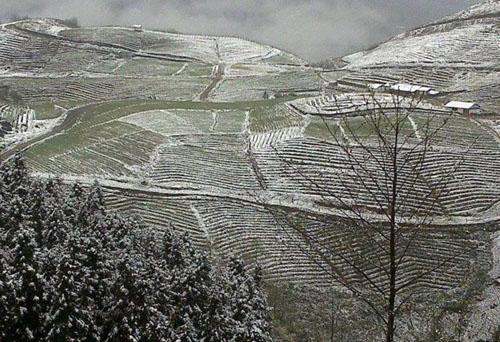 Những thửa ruộng bậc thang chìm trong băng tuyết và giá lạnh