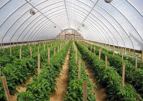 Mô hình nông nghiệp công nghệ cao