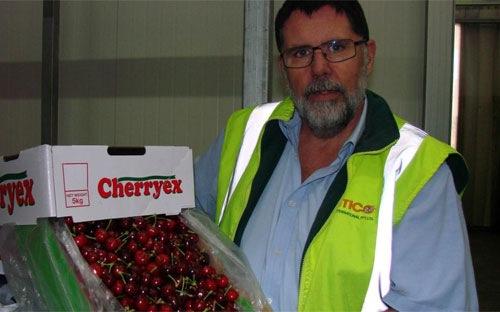 dừng nhập hoa quả, hoa quả Australia, ruồi giấm, nông sản vườn