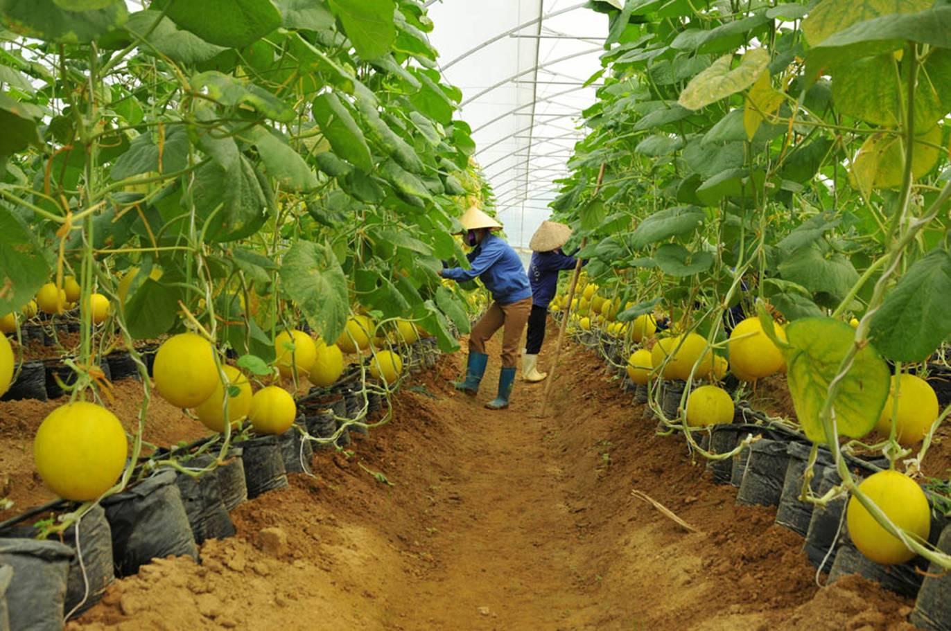 ngành trồng trọt, bộ nông nghiệp, chế biến, xuất khẩu
