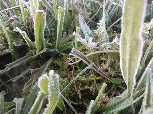 sương muối, tuyết trắng, sapa, băng giá, Trung tâm dự báo khí tượng thủy văn
