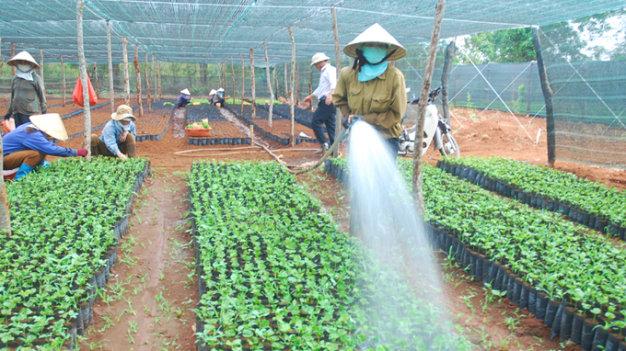 Bình Phước: Đẩy mạnh nhân chồi và vườn ươm cây năng suất cao