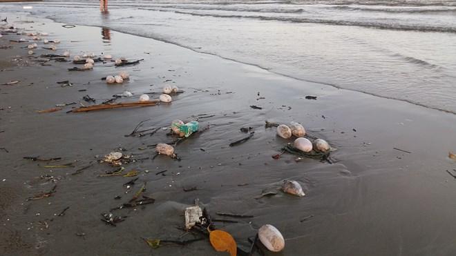 Những vật thể lạ hình trứng ồ ạt tràn vào bờ biển Trà Cổ