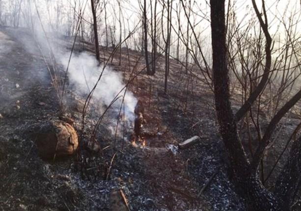 cháy rừng lôi âm