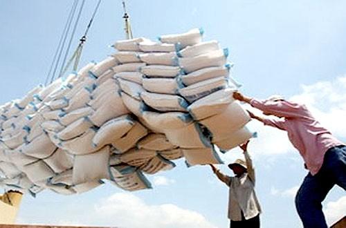 Xuất khẩu gạo sẽ ngày một tăng, nếu khoa học được đầu tư thích đáng.