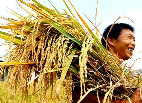 Những doanh nghiệp xuất khẩu gạo nên trích một phần lợi nhuận để đầu tư cho KHCN. Ảnh: