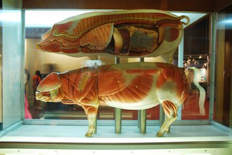 Bảo tàng thiên nhiên ở nước ngoài.