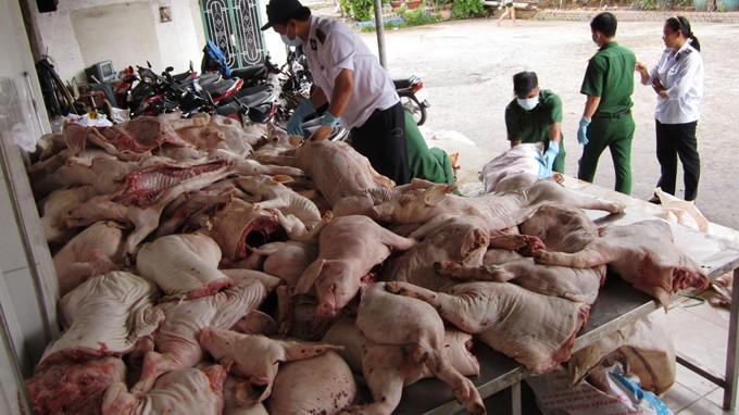Lực lượng chức năng kiểm tra lô thịt heo chết