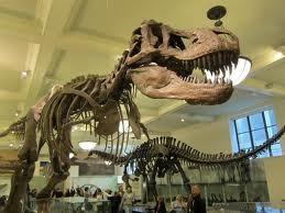 Bảo tàng Thiên nhiên ở News York, Mỹ
