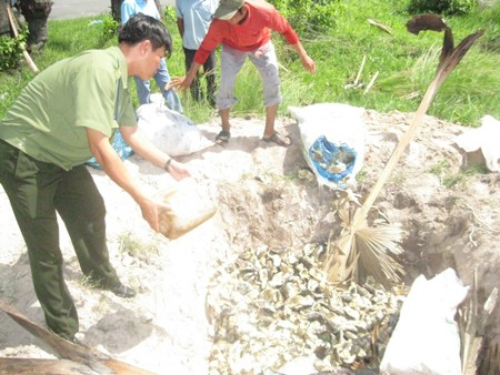 Tiêu hủy khô cá tra ở An Giang