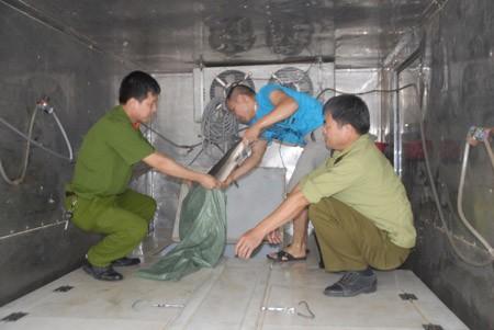 Lô hàng cá tầm lậu hơn 200kg bị bắt giữ ngày 8/5/2013 tại địa bàn xã Nguyễn Huệ (Hòa An, Cao Bằng).
