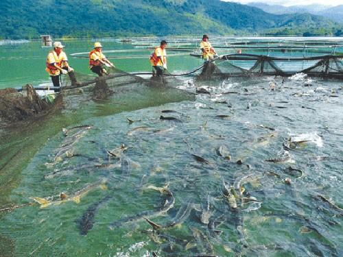 Mỗi xe cá tầm lậu tay buôn lãi 300 triệu đồng