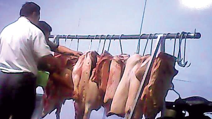 thú y Trảng Bom (Đồng Nai) - đóng dấu cho heo lậu