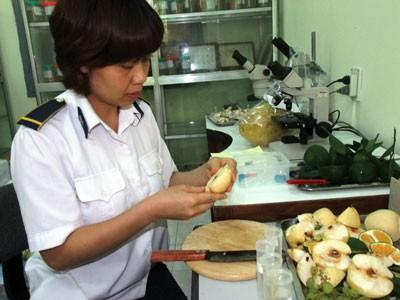 Cơ quan bảo vệ thực vật đang thu thập mẫu, kiểm tra dư lượng các loại hóa chất bảo quản, thúc chín tố, dư lượng có thể có trong các loại trái cây bán trên thị trường.