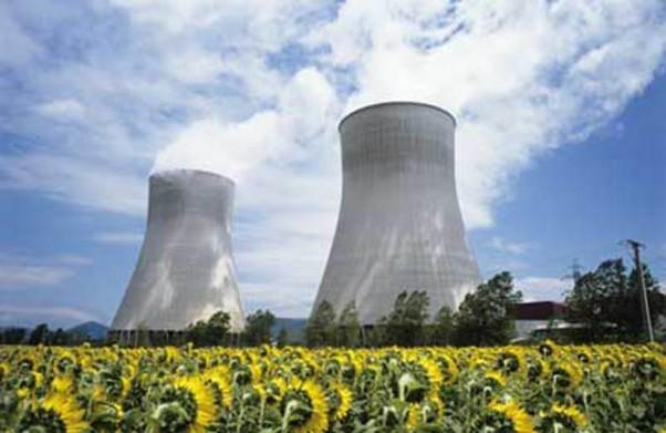 Sức sống của hoa hướng dương là tín hiệu khẳng định điện hạt nhân an toàn.