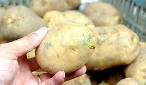 Tự hại mình vì coi thường các thực phẩm dễ gây ngộ độc 1