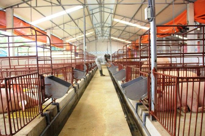 Trang trại chăn nuôi thành công nhờ công nghệ EM của Nhật Bản