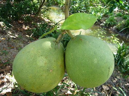 Tiền Giang luôn chú trọng việc nâng cao năng suất và sức cạnh tranh của trái cây đặc sản
