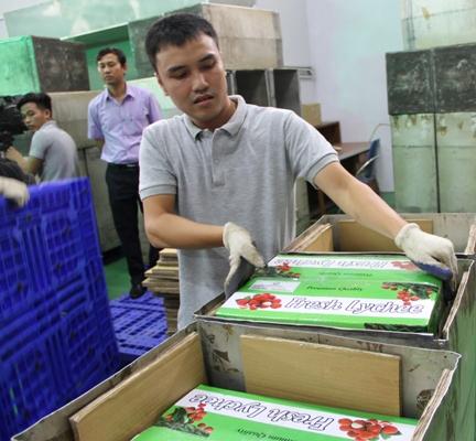 Đây là lô hàng vải thiều đầu tiên đi thị trường này được chiếu xạ ngay tại Hà Nội, rút ngắn thời gian, chi phí cho doanh nghiệp xuất khẩu.