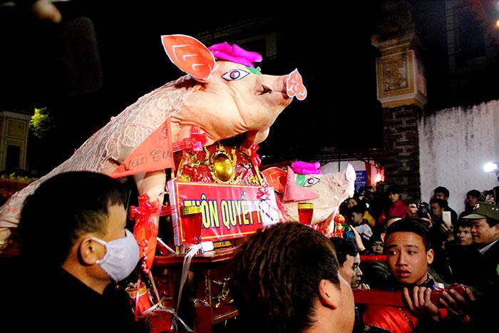 Ông lợn làng chọn phải trên 150-230kilogam để cúng tế