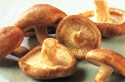 Nấm hương - Loại thực phẩm có giá trị dinh dưỡng cao