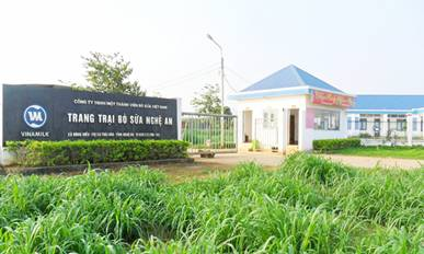 Trang trại bò sữa Vinamilk tại Nghệ An