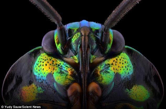 Nhiếp ảnh gia chụp macro, cận cảnh 10cm cho mỗi bức ảnh côn trùng.
