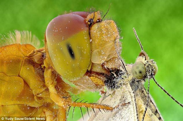 """Góc ảnh kỳ lạ khiến những loài côn trùng thật sự giống như những cá thể """"người ngoài hành tinh""""."""