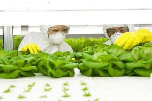 Chuỗi cung ứng thực phẩm an toàn