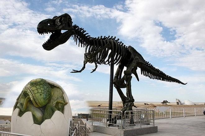 Nhờ có diện tích rộng lớn nên nơi đây trưng bày khá nhiều loại khủng long.