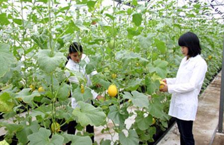 Lợi ích cây trồng công nghệ sinh học đem lại